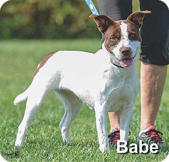 Pointer Mix Dog for adoption in Ottumwa, Iowa - Babe