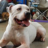 Adopt A Pet :: Feta - West Los Angeles, CA