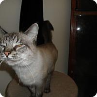 Adopt A Pet :: Teigen - Milwaukee, WI