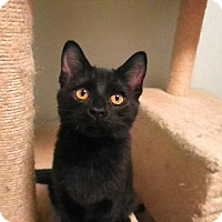 Adopt A Pet :: Ramses - Milwaukee, WI