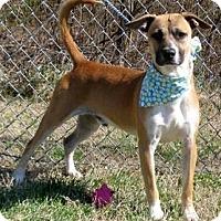 Adopt A Pet :: James - Aurora, IL