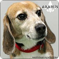 Adopt A Pet :: Aramis - South Plainfield, NJ