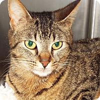 Adopt A Pet :: Paige - Grants Pass, OR