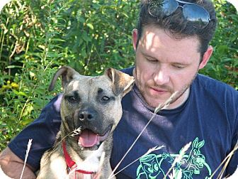 Boxer/American Staffordshire Terrier Mix Dog for adoption in Long Beach, New York - Brody