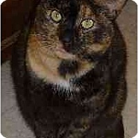 Adopt A Pet :: Kellsie - Bryan, TX