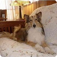 Adopt A Pet :: Roxanne - San Diego, CA