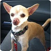 Adopt A Pet :: Honey - Seattle, WA