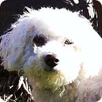 Adopt A Pet :: Jennie - La Costa, CA