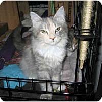 Adopt A Pet :: Devi - New York, NY
