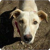 Adopt A Pet :: cheyenne - Eden, NC