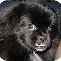 Adopt A Pet :: King - Tyler, TX