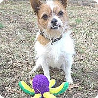 Adopt A Pet :: Toto - Mocksville, NC
