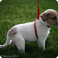 Adopt A Pet :: PRINCE CHARMING - Broomfield, CO