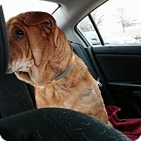 Adopt A Pet :: Sebastian in AR - Mira Loma, CA