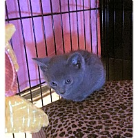Adopt A Pet :: Linus - Olmsted Falls, OH