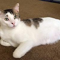 Adopt A Pet :: Mr. Big - Los Angeles, CA