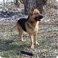 Adopt A Pet :: Ty - Sharon Center, OH