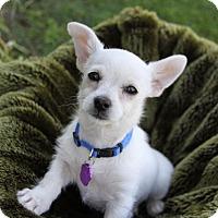 Adopt A Pet :: DONNY - Newport Beach, CA