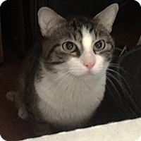 Adopt A Pet :: Tito - Lombard, IL