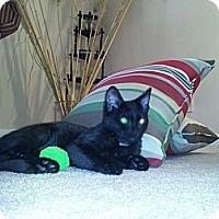 Adopt A Pet :: Itty-Bitty - Harrisburg, NC