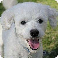 Adopt A Pet :: Fonzie - La Costa, CA