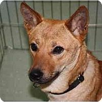 Adopt A Pet :: Daisy - Marysville, CA