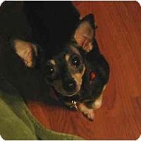 Adopt A Pet :: Little Girl - Swiftwater, PA