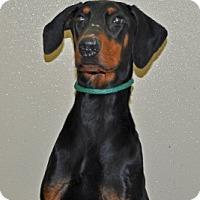 Adopt A Pet :: Guardian - Port Washington, NY
