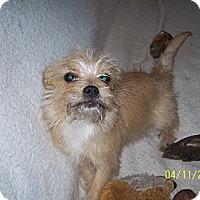 Adopt A Pet :: Meg - Andrews, TX