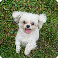 Adopt A Pet :: King Ralphy Princess Penelope - Ormond Beach, FL
