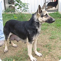 Adopt A Pet :: KRISSY - SAN ANTONIO, TX
