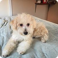 Adopt A Pet :: Freesia - Santa Ana, CA