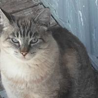 Adopt A Pet :: Mr. Peabody - El Cajon, CA
