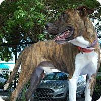 Adopt A Pet :: Usher - Bradenton, FL