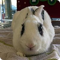 Adopt A Pet :: Kanga - Los Angeles, CA