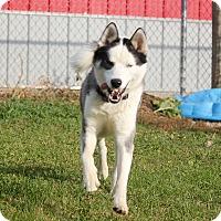Adopt A Pet :: Daredevil - Sycamore, IL
