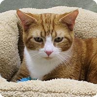 Adopt A Pet :: Dante - McCormick, SC