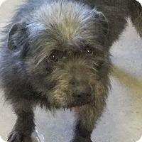 Adopt A Pet :: Abigail - NEEDS FOSTER! - Washington, DC
