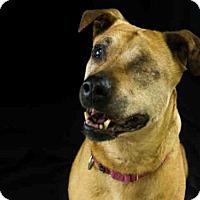 Adopt A Pet :: HARMONY - McKinleyville, CA