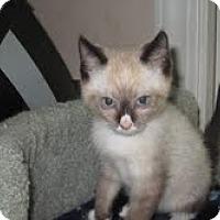 Adopt A Pet :: Marty & Mel - Arlington, VA