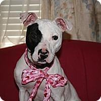 Adopt A Pet :: Hope - Covington, KY