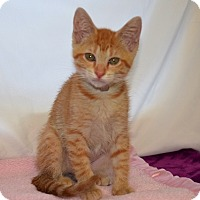 Adopt A Pet :: Mary Sue - Colorado Springs, CO