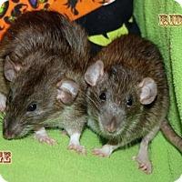 Adopt A Pet :: Midge - Walker, LA