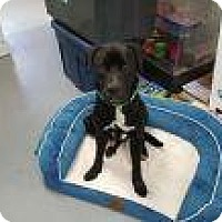 Adopt A Pet :: Second Chance - Rexford, NY