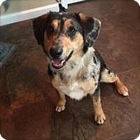 Adopt A Pet :: Rocco - Princeton, KY