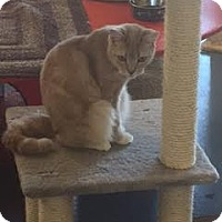 Adopt A Pet :: Ellie Mae - Jupiter, FL