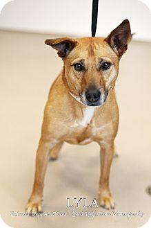 Terrier (Unknown Type, Medium) Mix Dog for adoption in Appleton, Wisconsin - Lyla