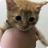 Adopt A Pet :: Po - Atlanta, GA