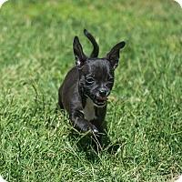 Adopt A Pet :: Thelma - Henderson, NV