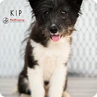 Adopt A Pet :: Kip - Columbus, OH